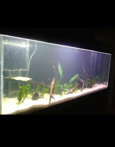 Vidros de aquário