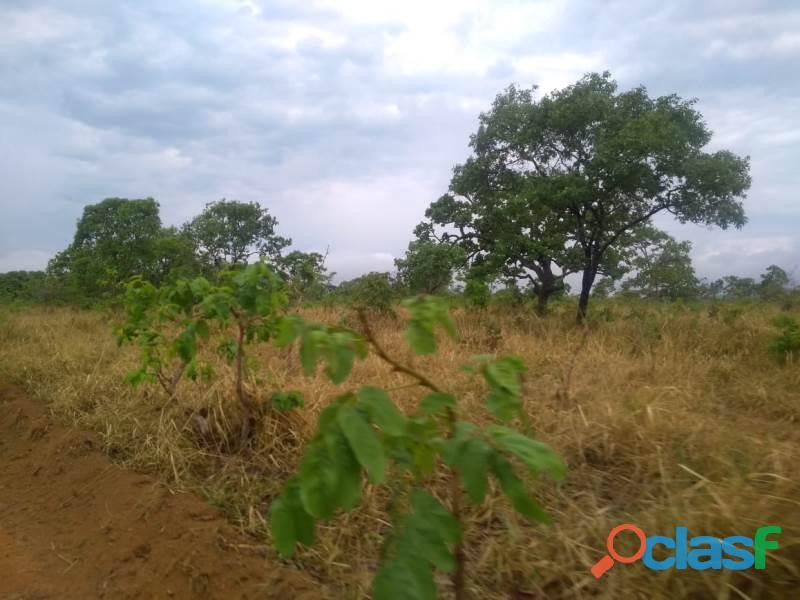 80 Alq. Planta 50 Boa De Água Formada Montada Oportunidade Corumbaíba GO 3