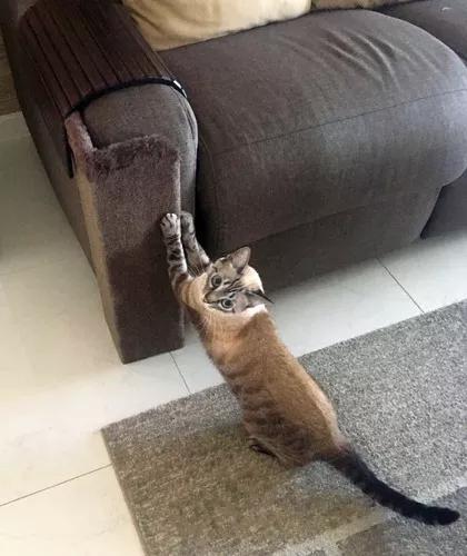 Arranhador gatos protetor sofá - kantofá 1515 várias