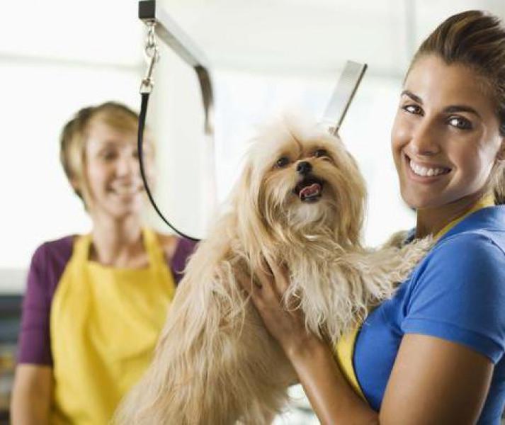 Pet shop contrata urgente**