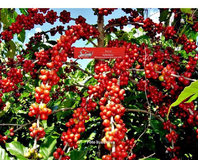 Fazenda de café em minas gerais alfenas plantando