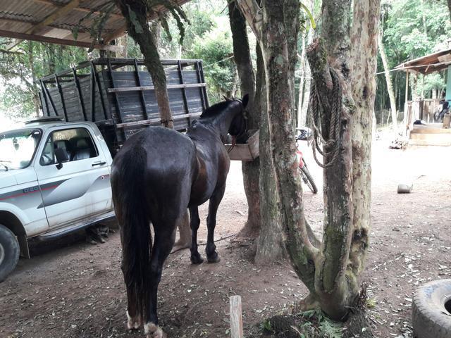 Frete de cavalos transporte