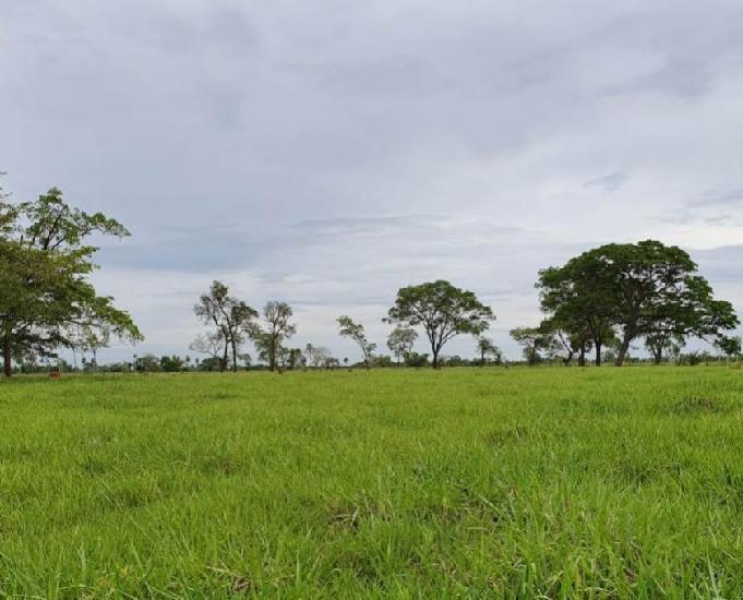Tima fazenda com 354 alqueires região de nova andradina