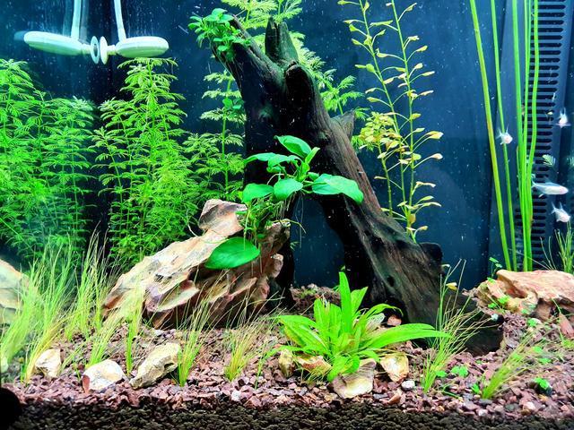 Aquário plantado (luminaria, recalque, substrato) até 6