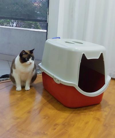 Banheiro para gato