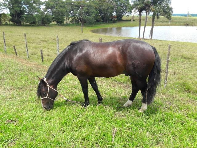 Coberturas de cavalo crioulo