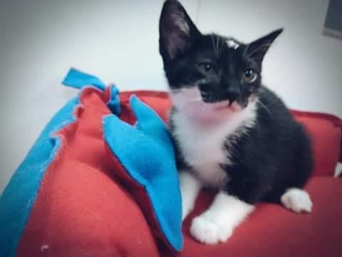 Doação gato fêmea