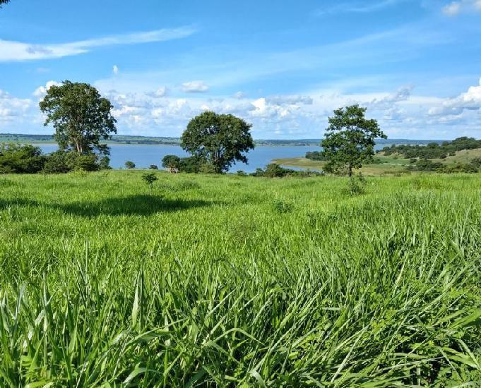 Excelente fazenda com 264 alqueires região de votuporanga