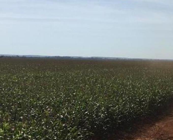 Excelente fazenda com 348 alqueires região de dourados ms