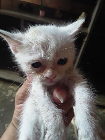 Gatos pra doação dois machos e uma fêmea