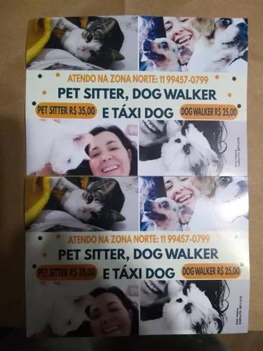 Pet sitter,dog walker e táxi dog