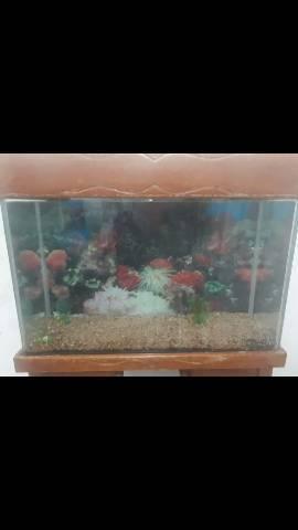 V.t aquário com movel 120l