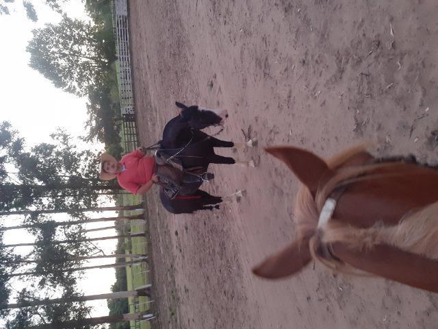 Vendo cavalo crioulo picasso registrado e confirmado