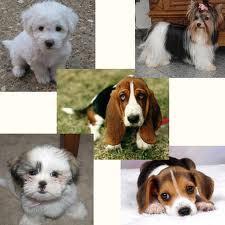 Cachorros de diversas raças