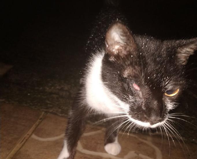 Gatinha preta que sofreu maus tratos