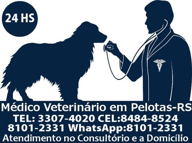 Médico veterinário 24hs em pelotas- rs