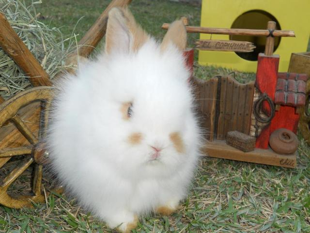 Mini coelhos f & j...