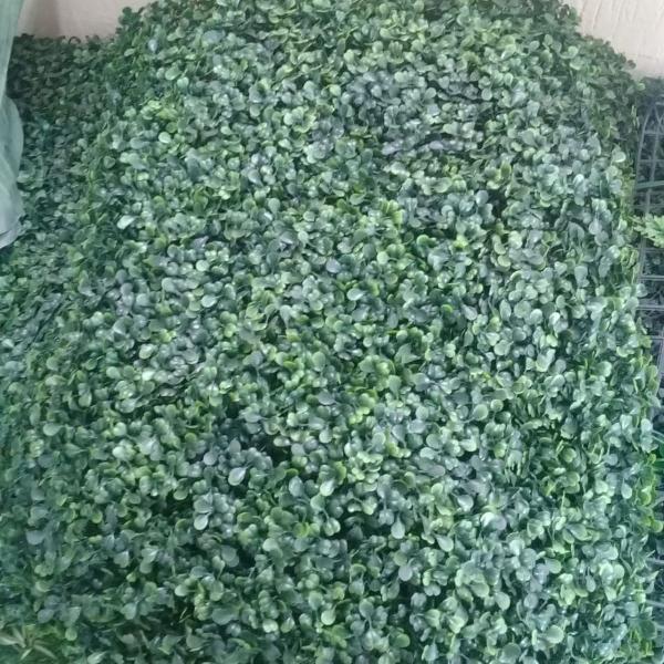 Placa de grama eucalipto 40x60