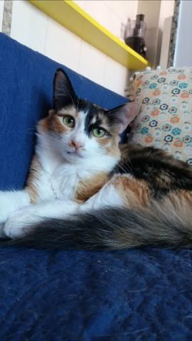 3 gatos castrados para adoção responsável