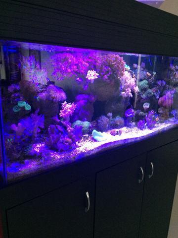 Aquario marinho e plantado