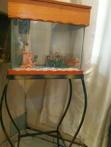 Aquário com suporte metálico para peixes pequenos