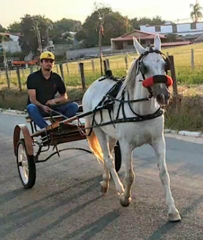 Cavalo de charrete vendo barato