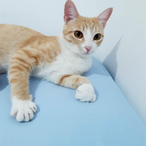 Doação gatinha castrada (leia)