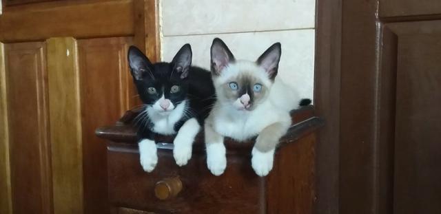 Doação de gatinhos machos