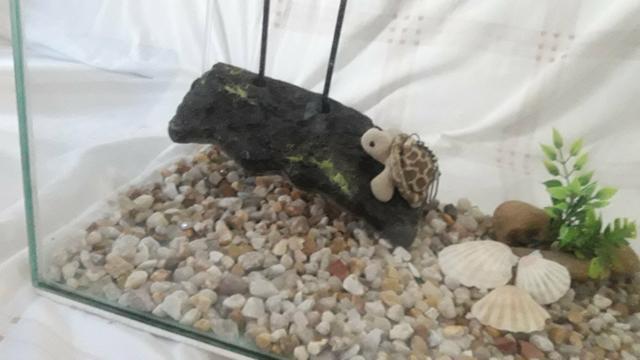 Mini deck flutuante para filhotes de tartaruga tigre d'água