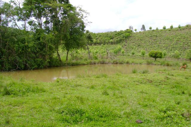 Torro Chácara 48 hectares em Cotiporã