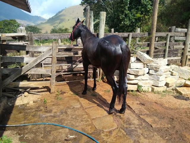 Gua paint horse