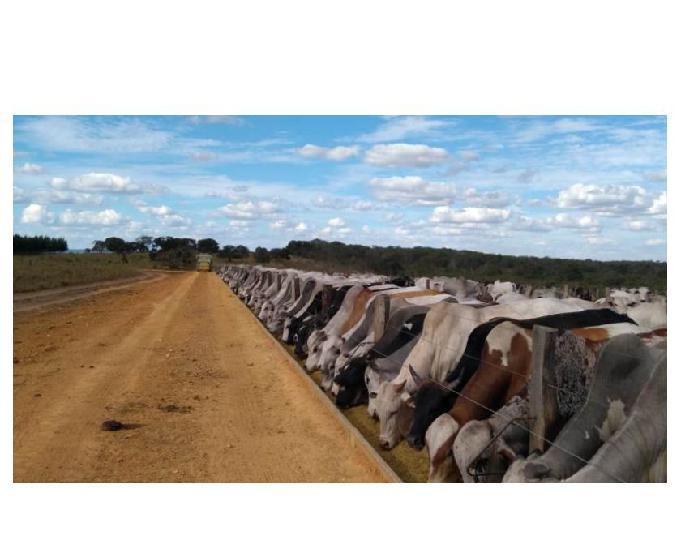 909 alq. p agricultura estuda prazo e 40% permuta em sp com