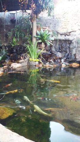 Adriano aquarios e lagos ornamentais
