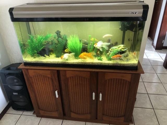 Aquario Boyu 246 Litros