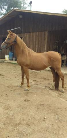 Venda permanente de cavalos