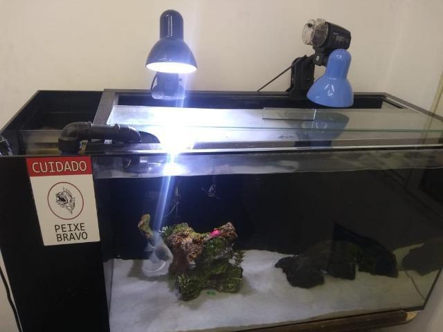 Vendo aquário completo *leia descrição