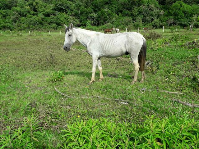 Vendo cavalo de sela e charrete