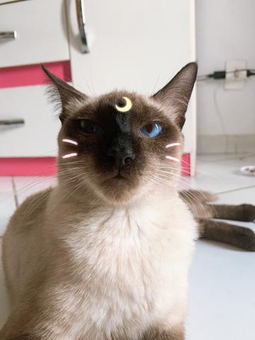 Adoção responsável - gata castrada (leia a descrição)