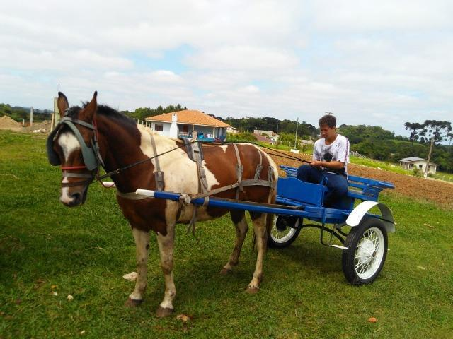 Charrete com cavalo