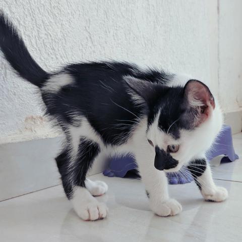 Doação gato macho 4 meses