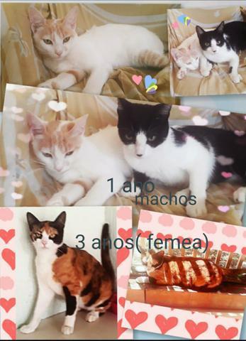 Doacao gatos(+50,00 de ração)