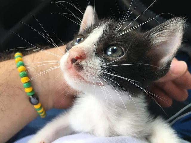 Doação responsável gatinho