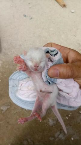 Filhotes de gatinhos cor branca
