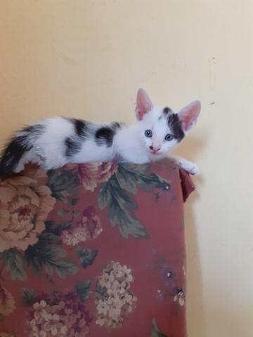 Gato macho para adoção responsável