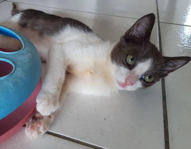 Gatos filhotes para adoção em lauro de freitas.ba
