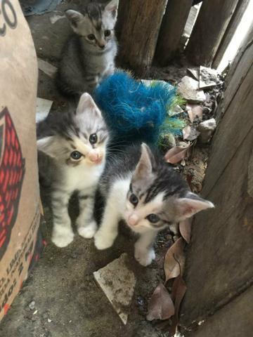 Gatos filhotes para doação. esplanada - ba