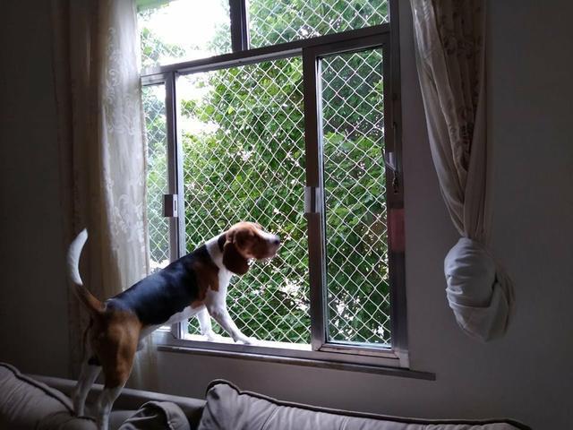 Rede de proteção para animais domésticos
