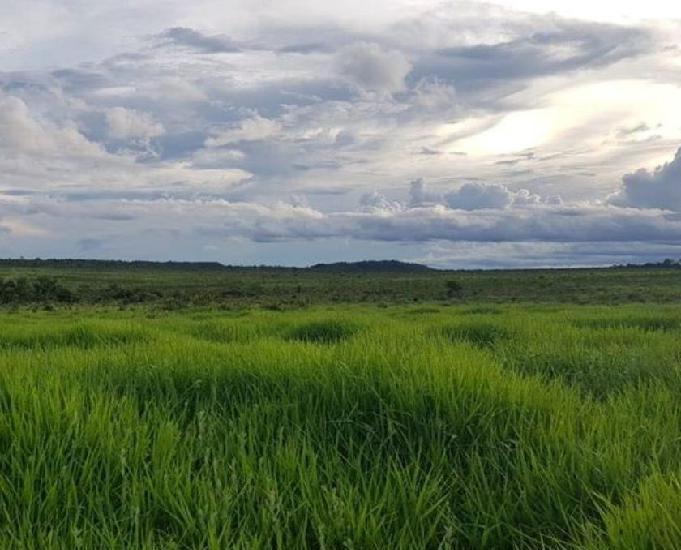 Excelente fazenda com 5.700 hectares em paranatinga mt