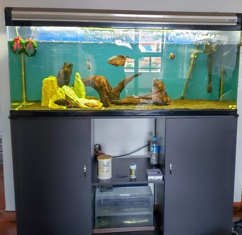 Aquario boyu com movel substrato tronco e pedras da foto