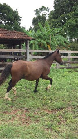 Cavalo barato - mara rosa